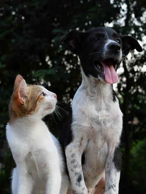 Le chat assis à côté du chien le regarde
