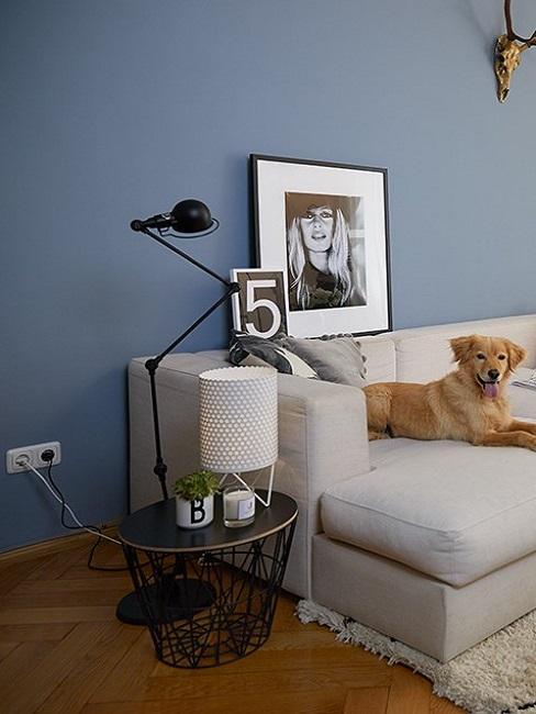 Grijze zitbank in woonkamer met blauwe wand, hond en bijzettafel