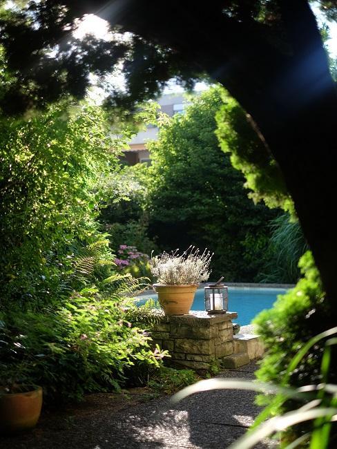 Design Garten mit Pool und vielen Pflanzen