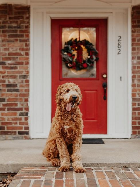 Hund vor Eingangstüre