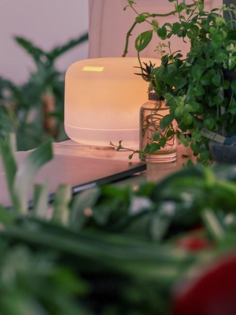 plantas y un purificador de aiire