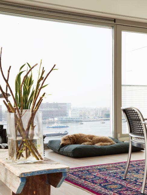 tapis oriental, chien, vase en verre