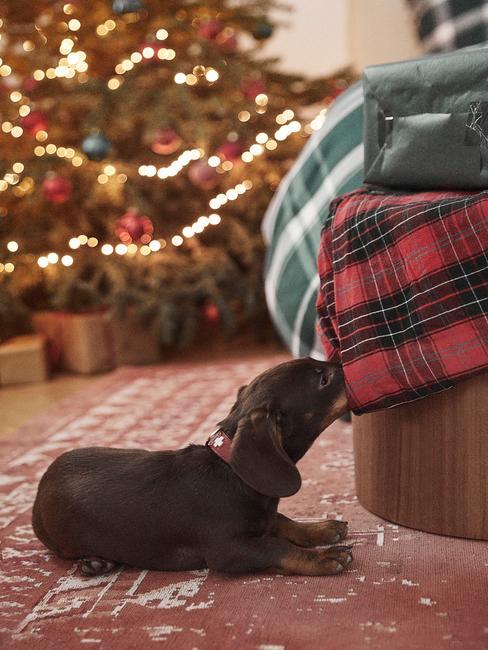 Petit chien devant un grand sapin de Noël