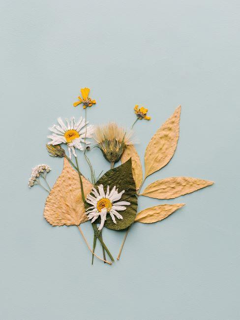 Feuilles et fleurs diverses sur table vert menthe