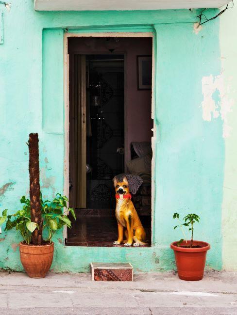Facade exterieure couleur menthe avec plantes en pot et chien a la porte