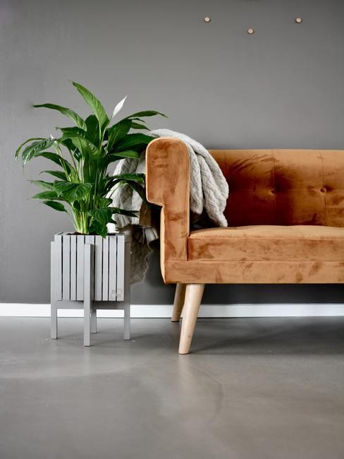 salon végétal avec canapé brun