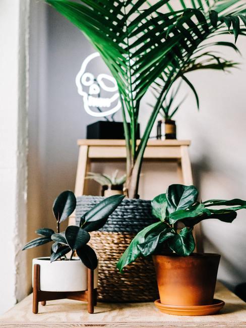 Tropisch interieur: decoratie met groene planten in kleurrijke boho potten