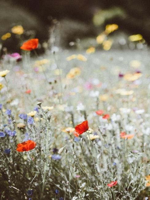 Bloemen in de wei in verschillende kleuren