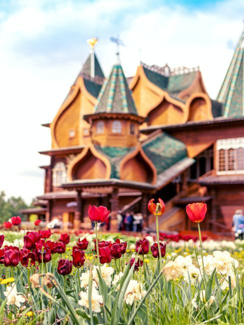 Veelkleurige tulpen in Nederland op de achtergrond een huis
