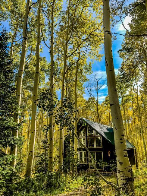 Zwart houten thuis tussen de bomen