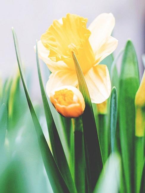 Gele bloemen van dichtbij gefotografeerd
