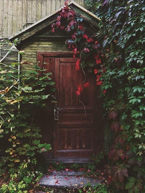 Houten huisje met klimop