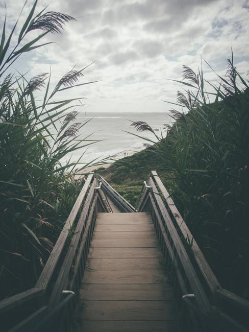 Uitzicht op de zee tussen de grote grassen