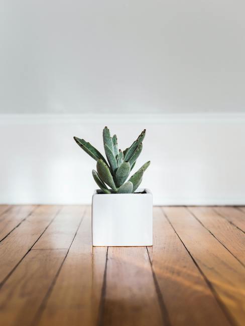Groene plant in een witte plantenpot op houten vloer