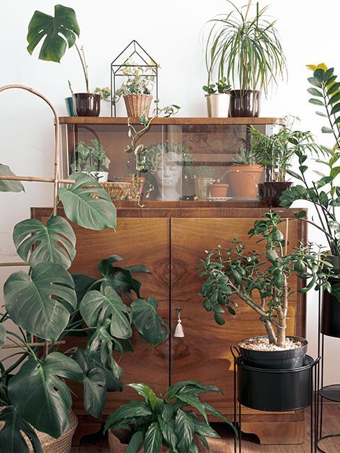 Vintage komoda na której stoją rośliny. Zdjęcie autorki bloga z-dusza.pl
