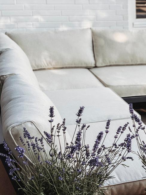 Zbliżenie na lawendę w doniczce oraz białą, narożną sofę na tarasie