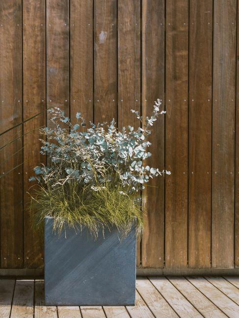 plante dans un cache-pot en béton en face d'un mur en plaquettes en bois
