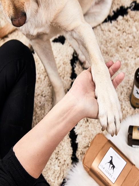 Gros plan d'un chien donnant la patte à l'homme