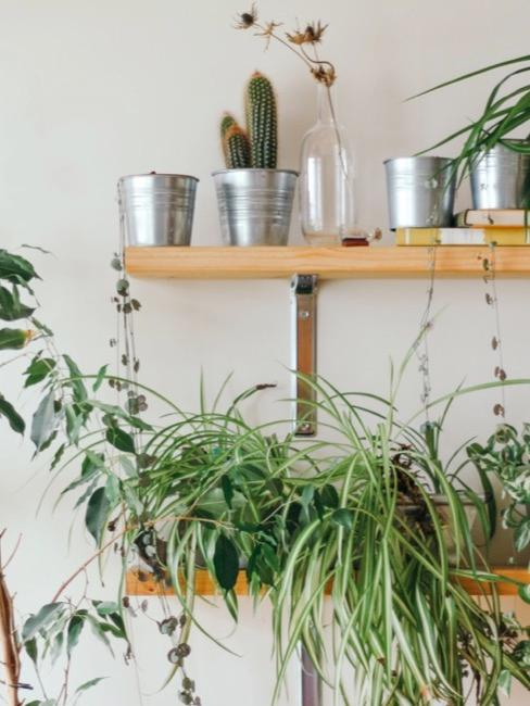 Pflanzenregal fürs Wohnzimmer mit verschiedenen Pflanzen