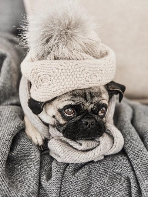 Kleiner Hund auf einer Decke auf dem Sofa