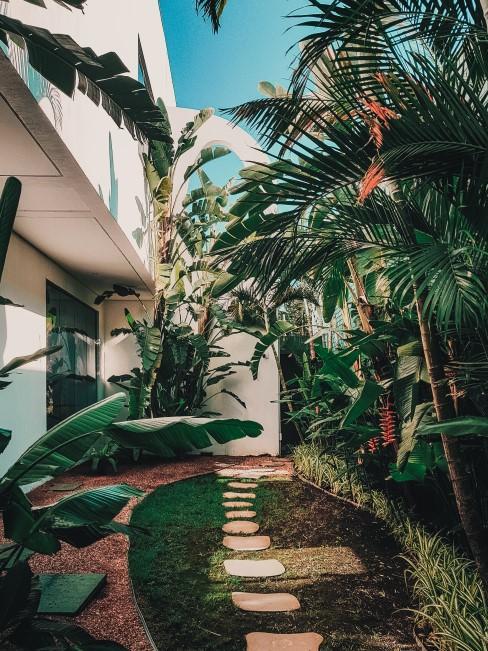 patio con palmeras