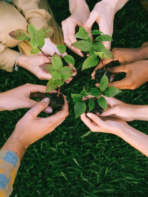 manos plantan plantas