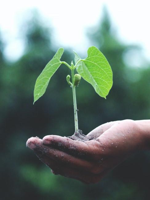 planta plantada en una mano
