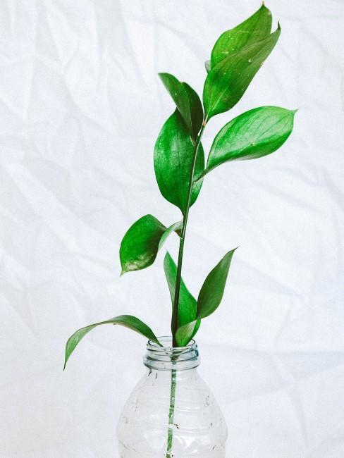 planta en una botella de plastico reciclada