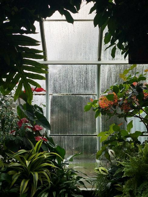 Serre de jardin sous la pluie