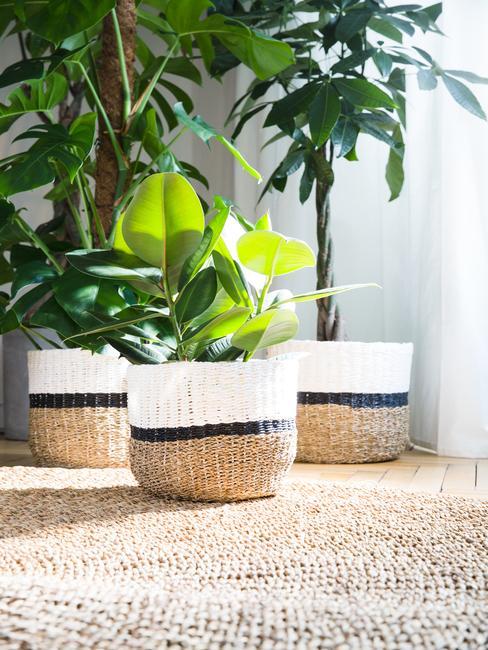 Plantes dans des paniers en osier sur tapis en jute