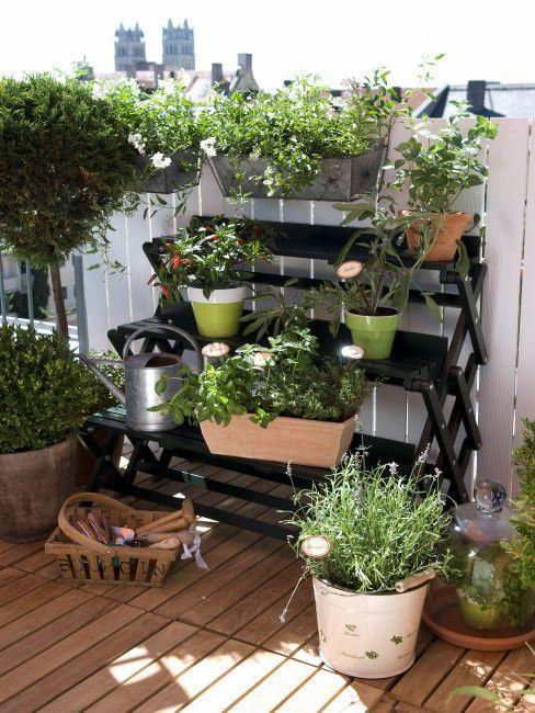 Jardin vertical sur etagere noire avec divers plantes et cache-pots