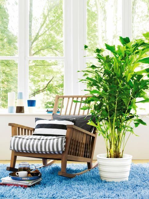 grand fenetre, fauteuil a bascule en bois avec rembourrage raye, grande plante verte posee a cote, tapis bleu