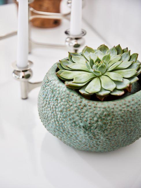 grande succulente ronde dans un cache-pot en céramique vert et un chandelier argente