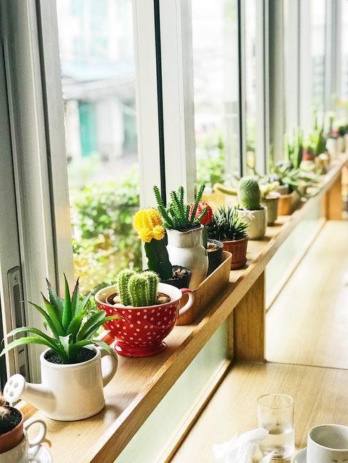 Differentes plantes succulentes dans des pots colores sur un rebord de fenetre