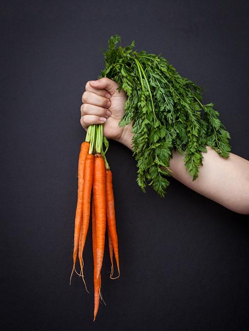 Bottes de carottes oranges tenues par une main