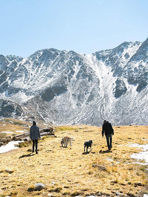 deux chiens à la montagne