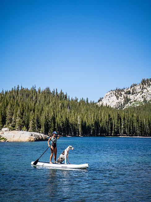 chien sur paddle