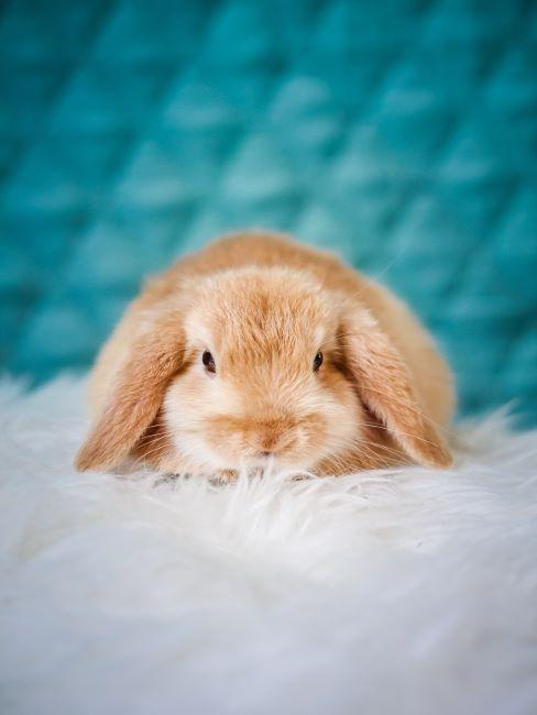 cruelty free, petit lapin, protection d'animaux