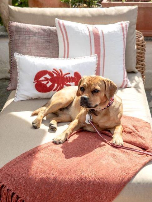 cane disteso su brandina con coperta e cuscini