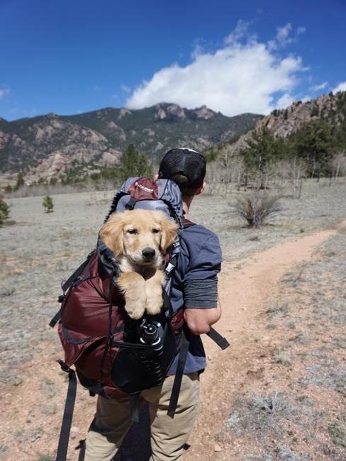 Doggy in backpack