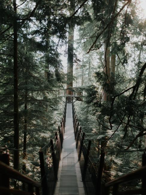 Loopbrug in het groene naaldenbos