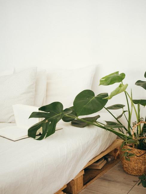 Łóżko wykonane z palet z białą narzutom oraz rośliną