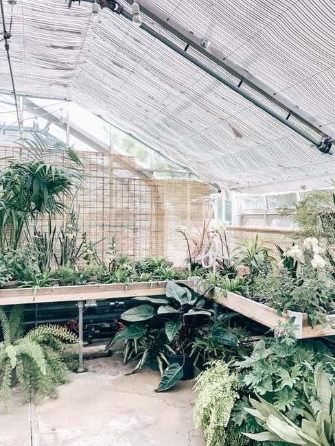 Szklarnia ogrodowa z roślinami