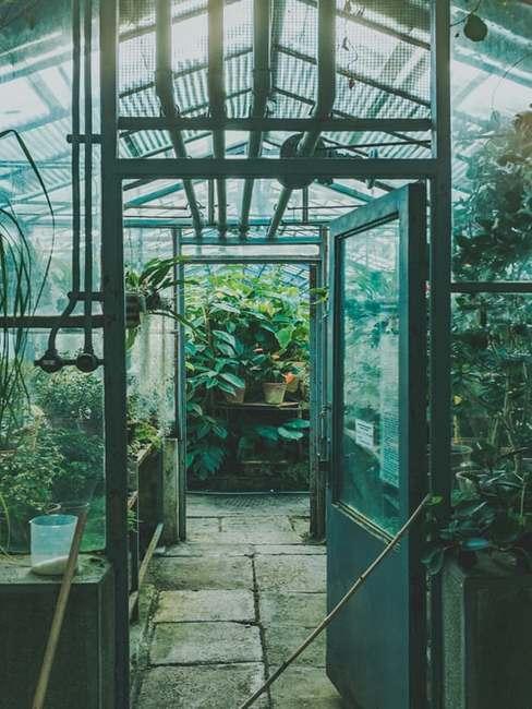 Wejście do dużej szklarni ogrodowej z roślinami oraz warzywami