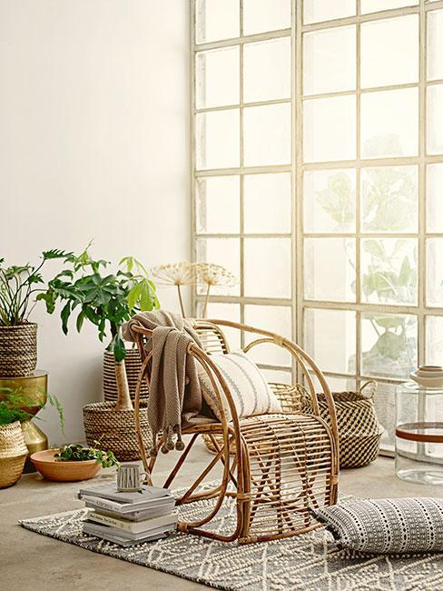 fotel z rattanu w oranżerii otoczony roślinami