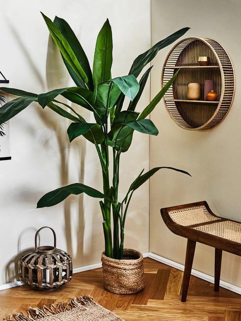 Duża roślina stojąca przy drewnianej ławce oraz przy metalowej latarence