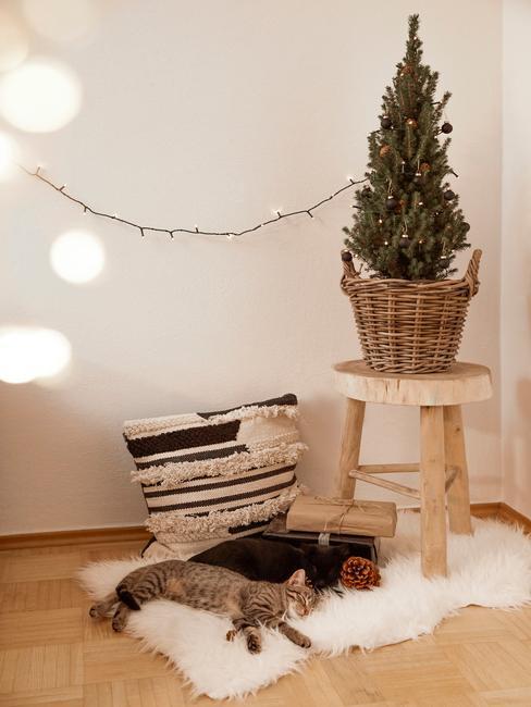 Mała choinka w koszyku na drewnianym stołku obok powieszonych na ścianie lampek