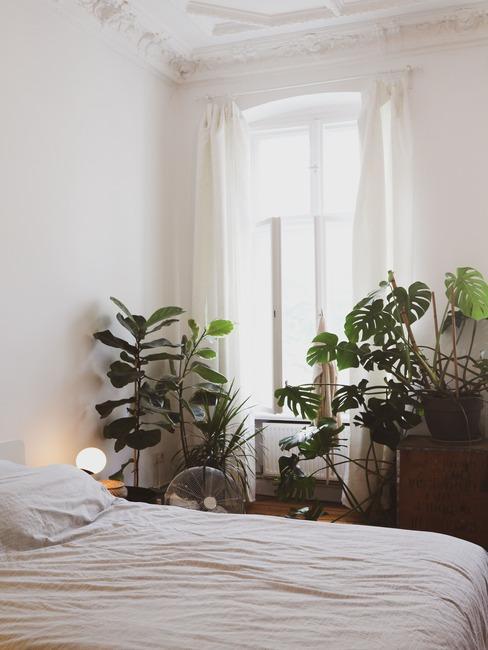 wnętrze białej sypialni z łożkiem, roślinami: palmą oraz monsterą