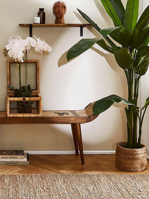 Storzczyk w szklanej doniczce z bambusowym wykończeniem na drewnianej ławce obok palmy bananowca