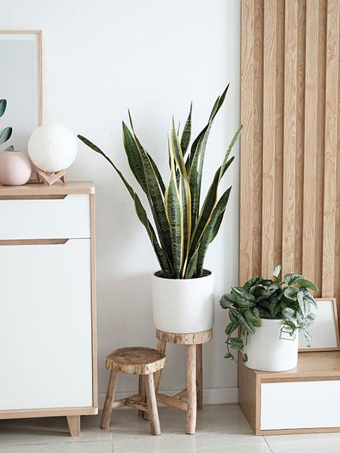 Kącik z roślinami w bieli z meblami z jasnego drewna
